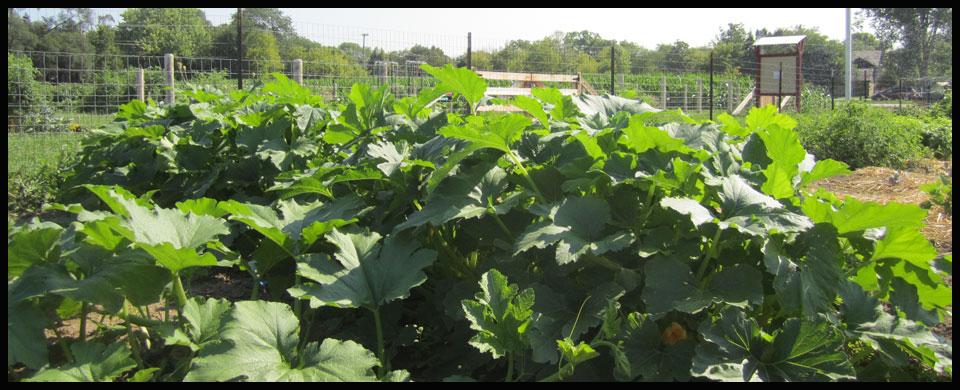 Plants at the Farm